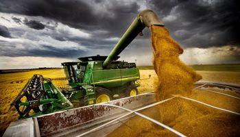 ¿Cuánto trigo se dejó de producir por la intervención oficial?