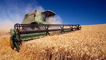 Estiman cosecha de trigo en 13,2 millones de toneladas