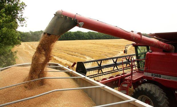 Hasta el jueves de la semana pasada, la recolección nacional de trigo logró cubrir el 10,8 % de la superficie apta.