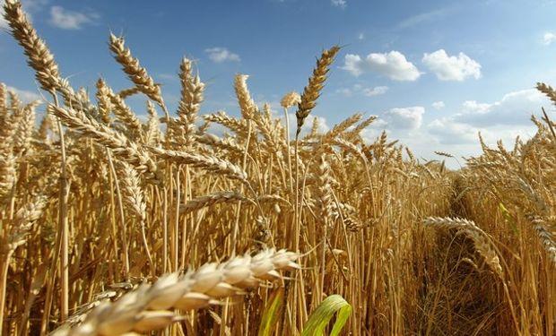 Cambió el escenario: optimismo en la cadena del trigo.