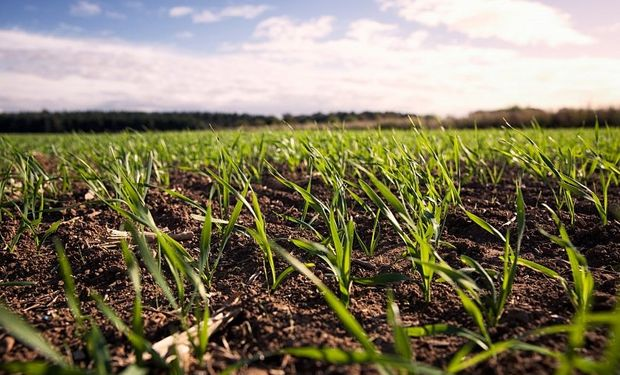 Sobre finales de la semana pasada corría el rumor de que el Ministerio de Economía trabajaba en el diseño de estímulos para la siembra.
