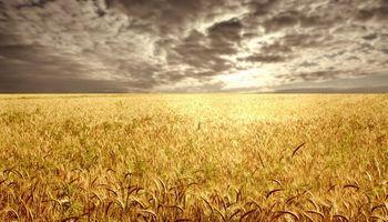 Intervención oficial puso al trigo en el ojo de la tormenta