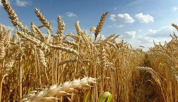 Brasil: estiman una caída del 13,5% en la importación de trigo