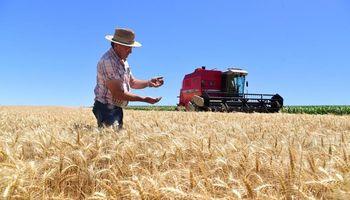 Grandes productores de carne de Brasil buscan originar trigo para reemplazar al maíz
