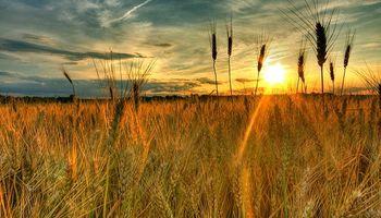Quinta jornada consecutiva de subas para el trigo en CBOT