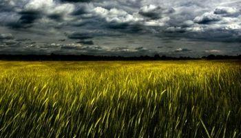 Cae el trigo en Chicago: cerró en mínimos de seis meses y medio