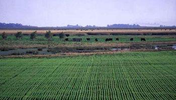 Caminos intransitables y pérdidas en trigo por las inundaciones