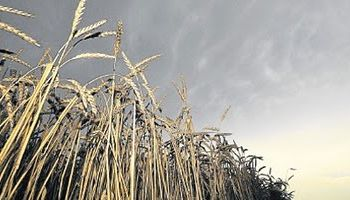 El Niño amenaza con golpear producción mundial de alimentos