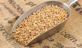 ¿Oportunidad? Sube el trigo por los impuestos que Rusia aplica a la exportación