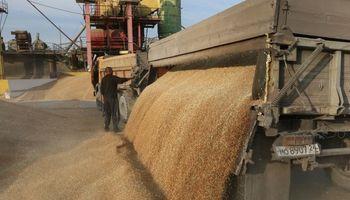 Rusia exportará un 10% menos de trigo por aplicar retenciones