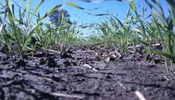 Condiciones óptimas para el trigo en Santa Fe