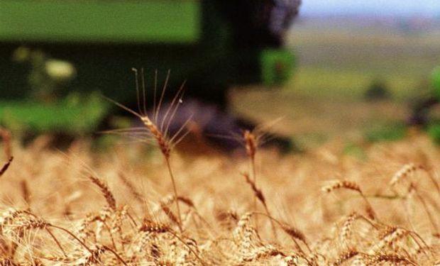 """""""Creo que trigo en la región hará algo de falta"""" aseguró Carlos Dalmás."""