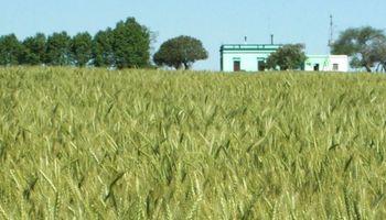 Uruguay: trigo y cebada con rendimientos récord