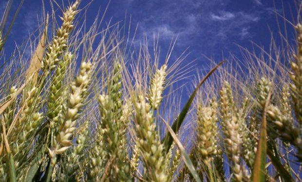 Las estimaciones corresponden a la Dirección de Estadísticas Agropecuarias (DIEA), del Ministerio de Ganadería, Agricultura y Pesca.