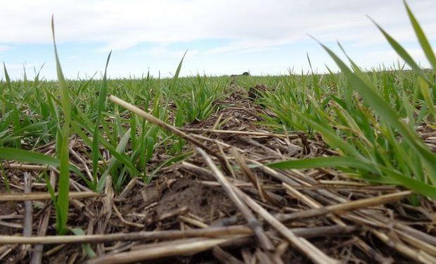 Panorama comercial del trigo espera señales