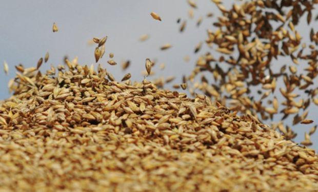 ¿Cómo viene la comercialización de trigo?