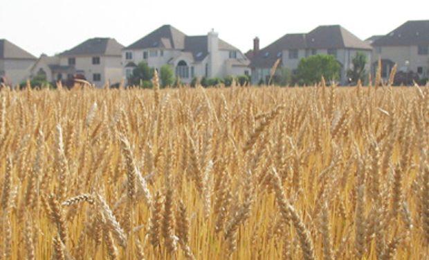 Cosecha de trigo de Francia en 2013 será la mayor en 9 años