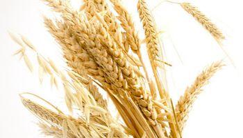 Aumentó la estimación de trigo para el ciclo 2014/15