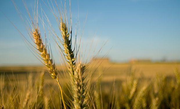 Mejora la proporción de gramíneas en la rotación de cultivos.