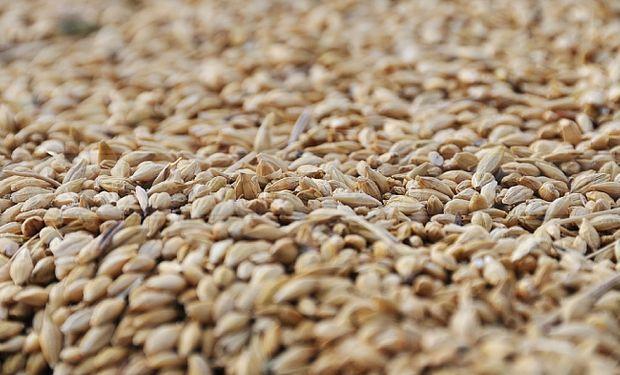 Egipto compró 295.000 toneladas de trigo