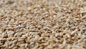 Egipto limita humedad máxima del trigo