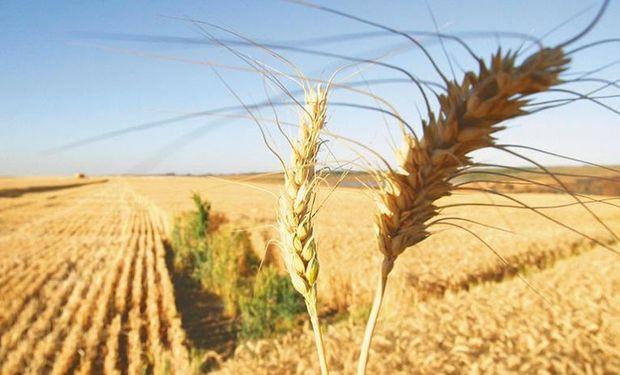 Derogan resoluciones de Moreno que aplicaban ley de abastecimiento para el trigo.