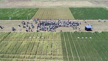 El Comité de Cereales Invernales compartió sus consideraciones tras la aprobación condicionada del trigo HB4