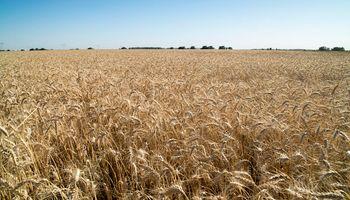 Un funcionario de Agricultura se refirió a la posible intervención sobre el mercado del trigo