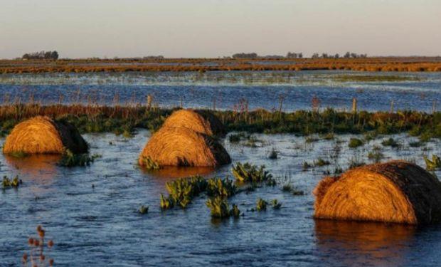 El 51 % de las 5.450.000 hectáreas se encuentra afectada por excesos hídricos que limitan el acceso a los lotes.