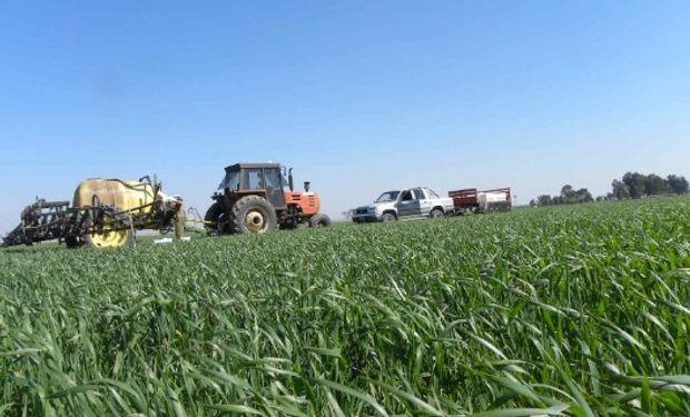Condición de humedad que se mantiene estable para el trigo.