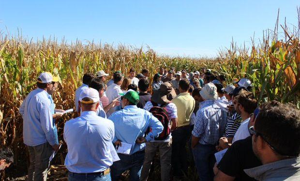 Cómo dan los números del planteo trigo-maíz de segunda en Córdoba