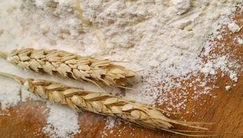 ¿El trigo pan argentino no sirve para hacer pan?