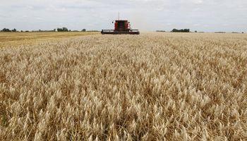 Leves bajas para el precio del trigo luego de alcanzar un máximo desde 2018