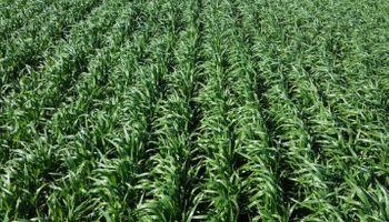 Riesgo de precios para el trigo 2016/17
