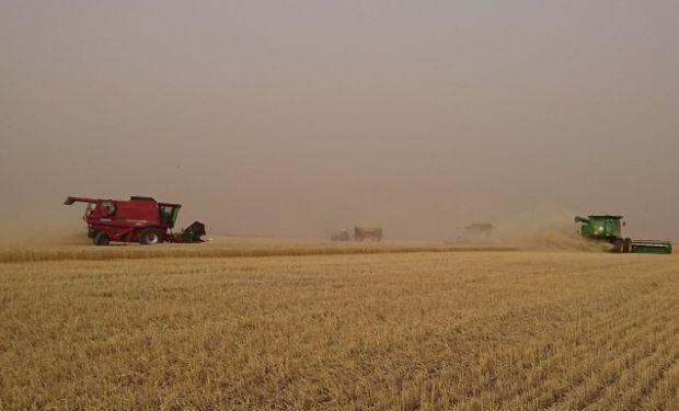El progreso nacional de cosecha alcanzó el 20,6 % de la superficie apta, con un rinde medio nacional que ascendió a 18,4 qq/Ha.