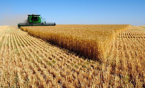 Fuertes subas para el trigo: el mercado teme por una sequía en Rusia