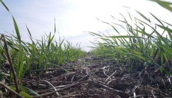 ¿Cómo viene el trigo sobre el centro norte de Santa Fe?