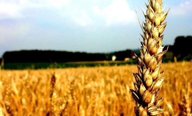 """""""El trigo sería más caro sin retenciones ni cupos"""""""