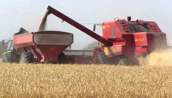 El doble cultivo le gana las apuestas a la soja de primera
