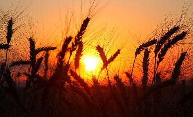 El contrato de trigo con vencimiento en marzo ajustó en US$159,4, luego de subir por encima de un 3% a lo largo de la rueda.