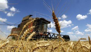 Uruguay: índice proteico limitaría la venta de trigo a Argentina
