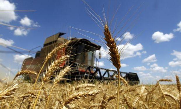 Se estima que todavía hay un volumen de trigo cercano a las 500.000 toneladas por vender.