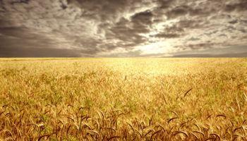 Esperan evitar más daños al trigo de EE.UU.