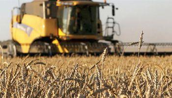 Empresarios de México podrían comprar hasta 50.000 toneladas de trigo