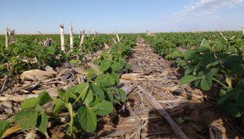 Año Niña: consejos para reducir el impacto sobre los cultivos de verano