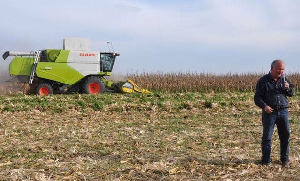 El cultivo cosechado fue el maíz KM 4500 GL Stack de KWS.