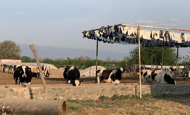 Lechería extra pampeana: cómo y por qué es un ejemplo la producción láctea tucumana