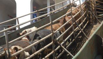 Turquía seguirá ávido de carne y de animales