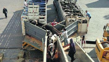 Turquía vuelve a comprar ganado en pie