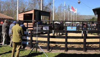 En una exposición de Balcarce se vendió un toro Angus a 600.000 pesos